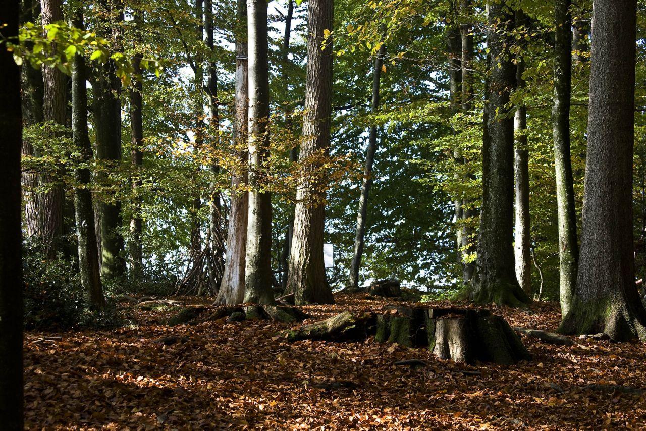 Wald mit Laub am Boden