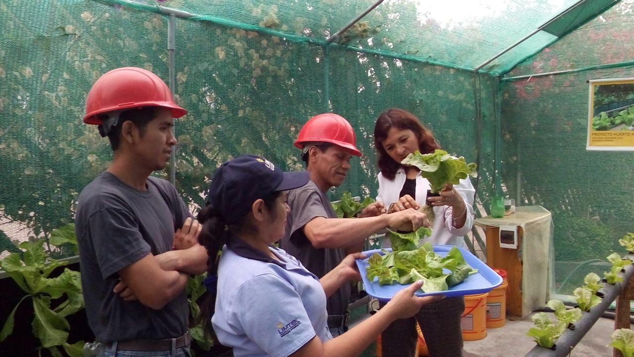 Hydroponic Garden Sika Peru