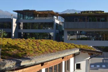 extensive Dachbegrünung auf Bitumenbahnen