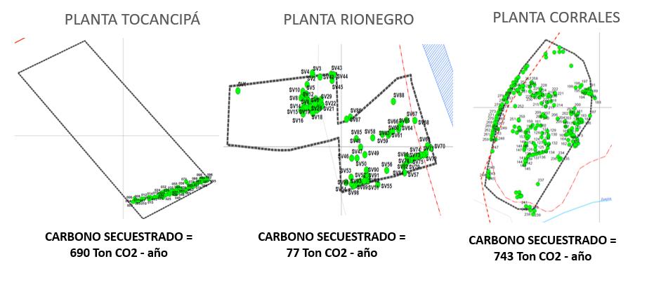 Compensación del dioxido de carboo por medio de los arboles