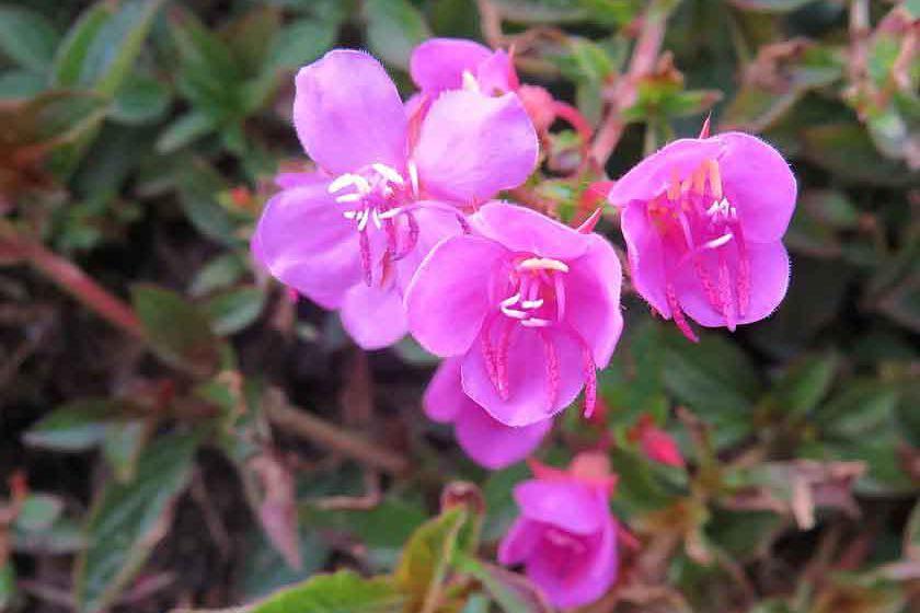 Flowers at the Sika Tocancipa Plant