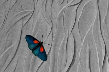 Butterfly on textured concrete wall
