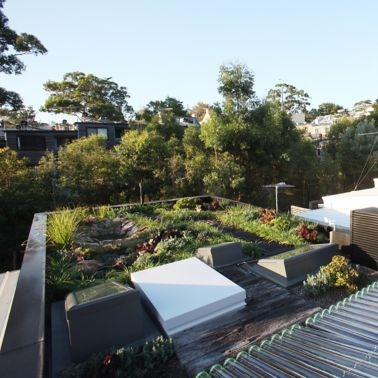 The green roof of the Forest Lodge Eco Home in Sydney, Australia