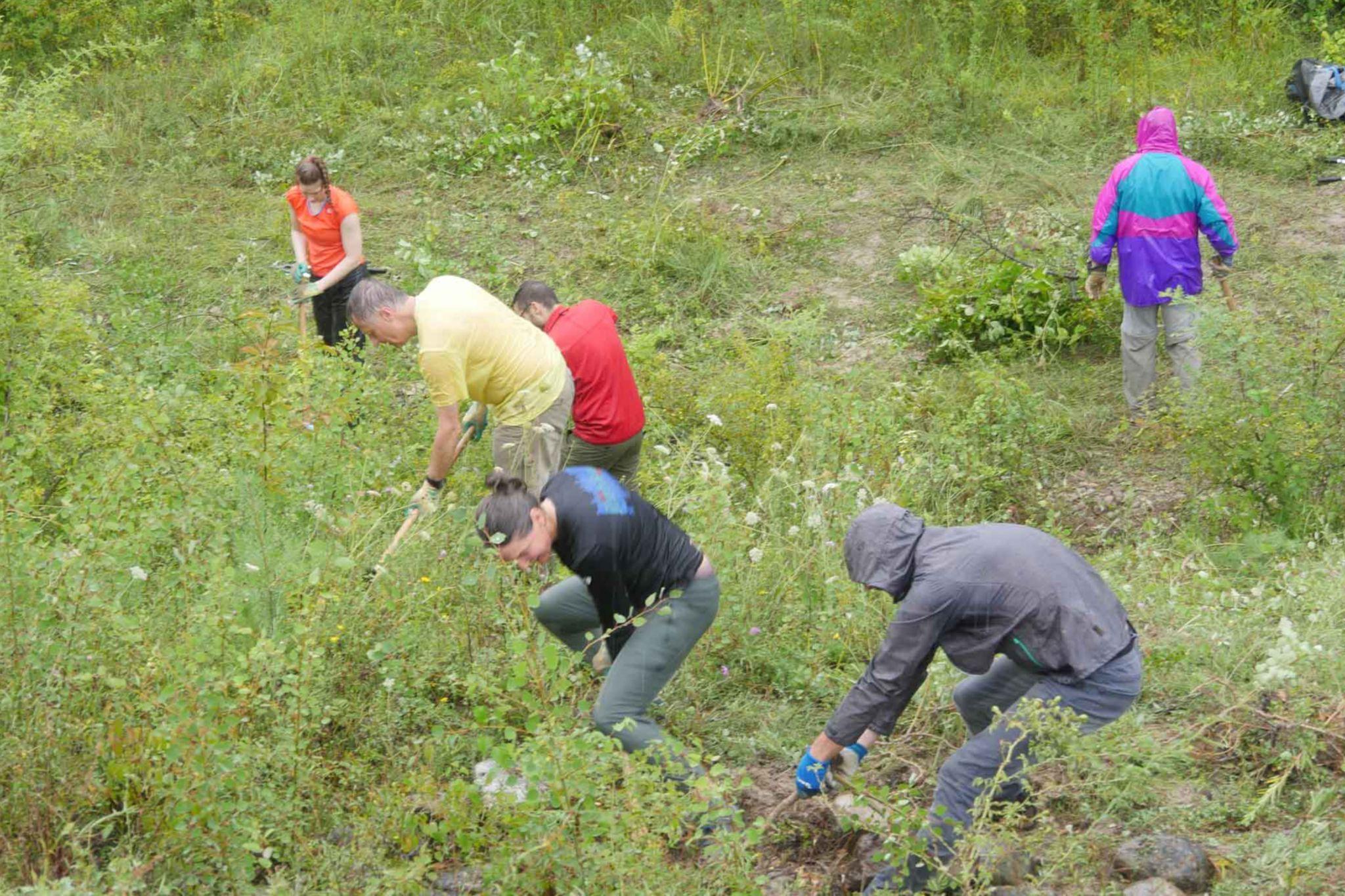 Group of People Gardening