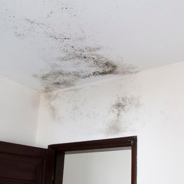 Mold on white wall - Fungus on white background