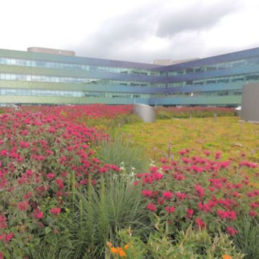 Mercy Hospital Green Roof