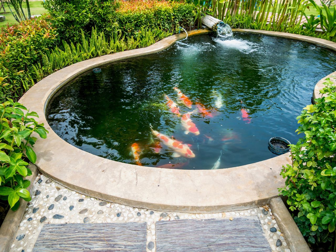 Solutions for your Pond